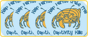 hermit-crab-stickers