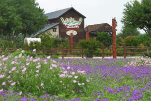 wildseed-farms