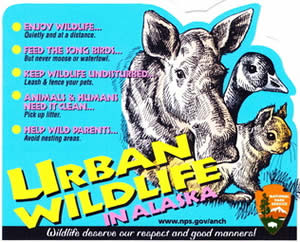 urban-wildlife