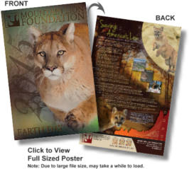 FREE Mountain Lion Poster