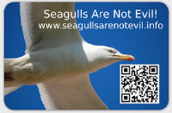 Seagulls-Are-Not-Evil