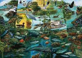 estuaries-scenes-of-transition-poster