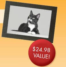 FREE Photo Session for Your Cat and 8x10 Print at JCPenney Portraits