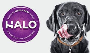 Halo Pet Solutions Event