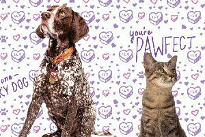 FREE Valentine Card with Your Pets Photo