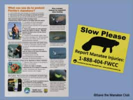 FREE Save the Manatee Materials